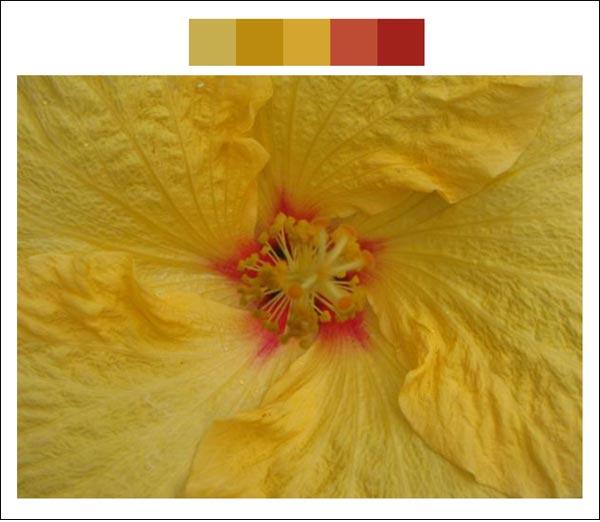 Flower color palette 6