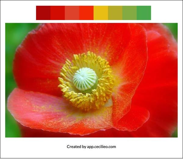 Flower color palette 8