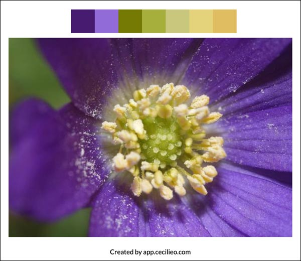 Flower color palette 2