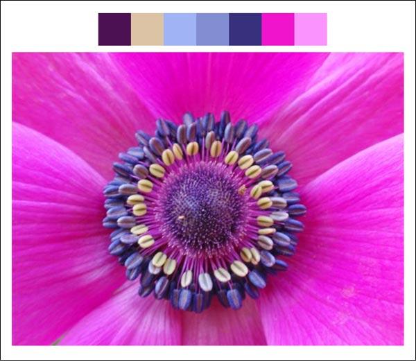 Flower color palette 3
