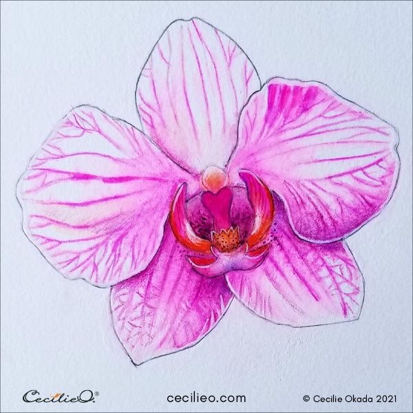Completed orchid flower art with watercolor pencils.