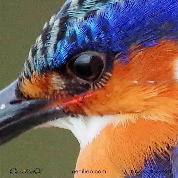Photo enlargement of the eye.