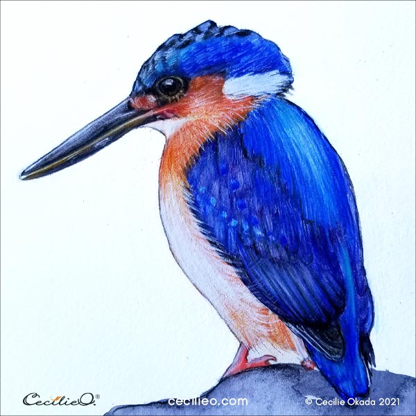 The completed kingfisher. realistic drawing with colored pencils on a base of watercolor.