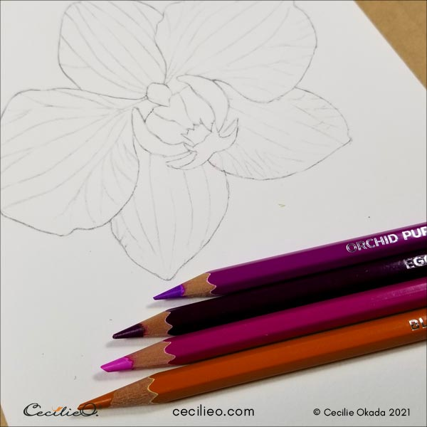 Selecting watercolor pencils to use for the orchid.