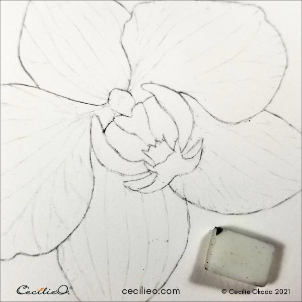Erasing the lines on the petals, leaving only slight pencil marks.