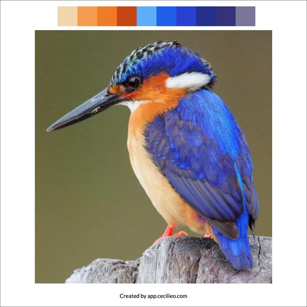Selecting the color palette with the color palette from image tool.