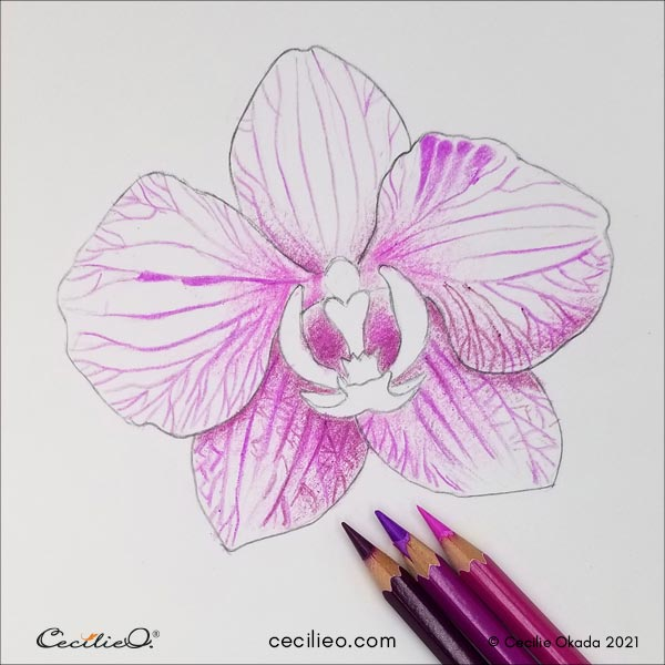 Drawing the lines on the petals with watercolor pencil.