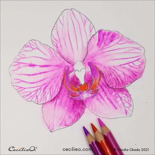 Coloring the central part of the orchid.