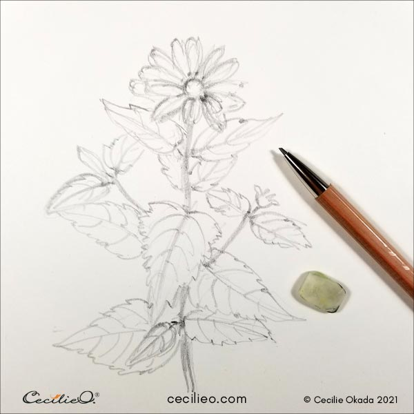 Loose drawing of the red sunflower.