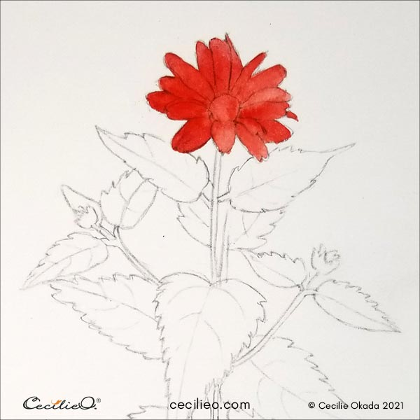 Painting with red watercolor for the flowerhead.