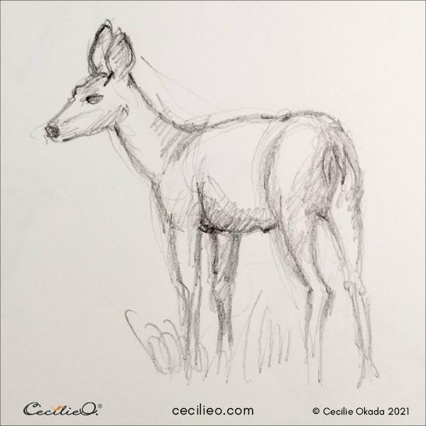 Deer sketch.