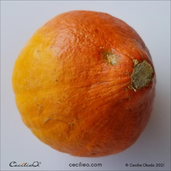 Reference photo of the whole pumpkin.