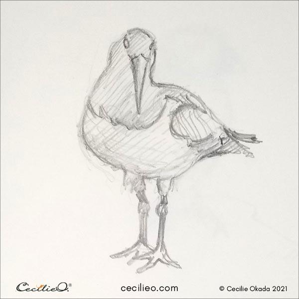 Oystercatcher bird sketch